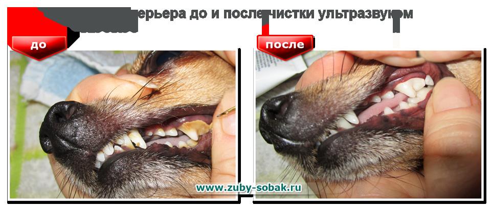 Crest для отбеливания зубов отзывы